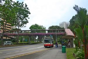 Parada de autobus: suelen estar al lado de pasos elevados peatonales para facilitar el acceso